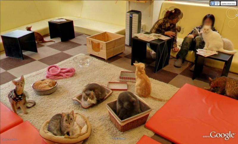 STREET VIEW : Neko Café, ou bar à chats Tokyo Japon Neko10