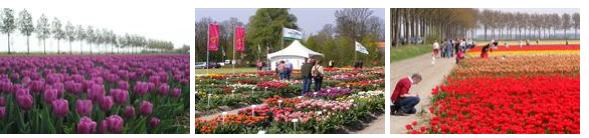 Festival des Tulipes & Butzelaar Kennedymars: 29-30/04/2013 Butzel11