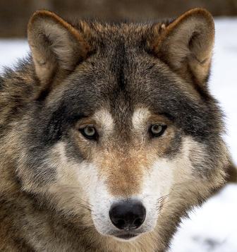 Wolfs Womo Welt
