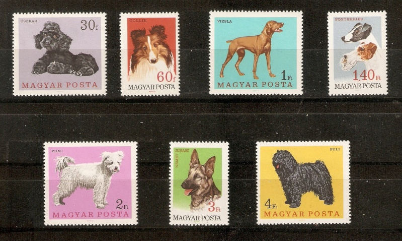Hunderassen in Ungarn Blog_019