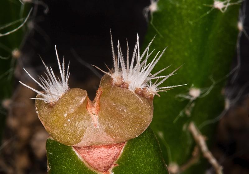 Kaktus Samen Mix aus´m Baummarkt ... - Seite 2 Baumar11
