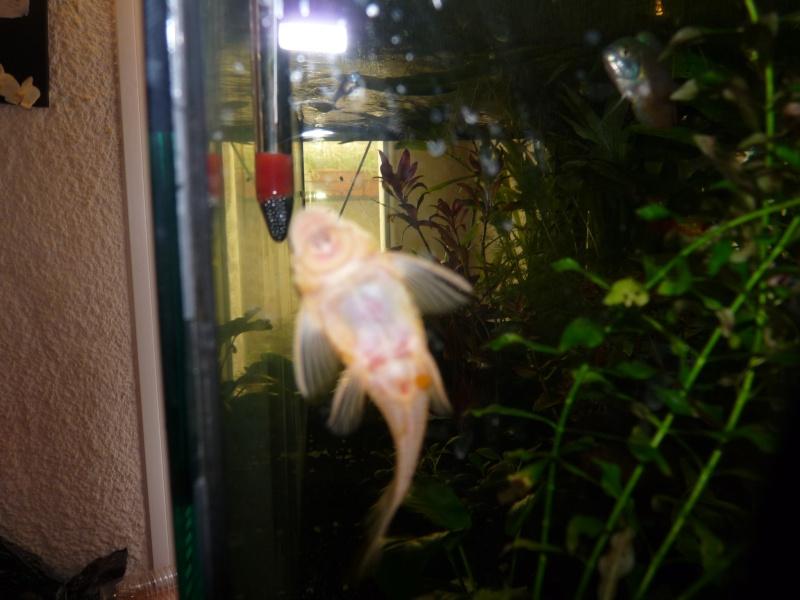 Mes deux amours et mes poissons tropicaux. - Page 4 P1120717