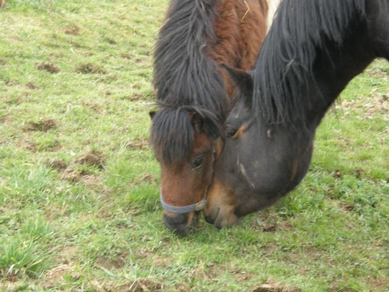 POLLY - ONC Poney Shetland née en 2004 - adoptée en mars 2013 par Moutarde - Page 2 Polly210