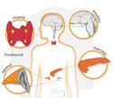 منتدى دكتور خالد أبو الفضل لصوتيات و فيديوهات فسيولوجيا الغدد الصماء Endocrine Physiology
