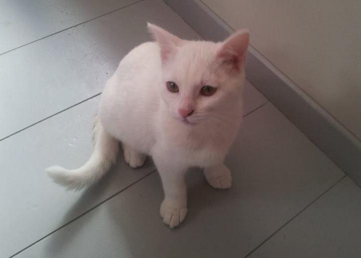 [ADOPTION] Bounty jolie chatonne blanche née en mai 2013 11861611