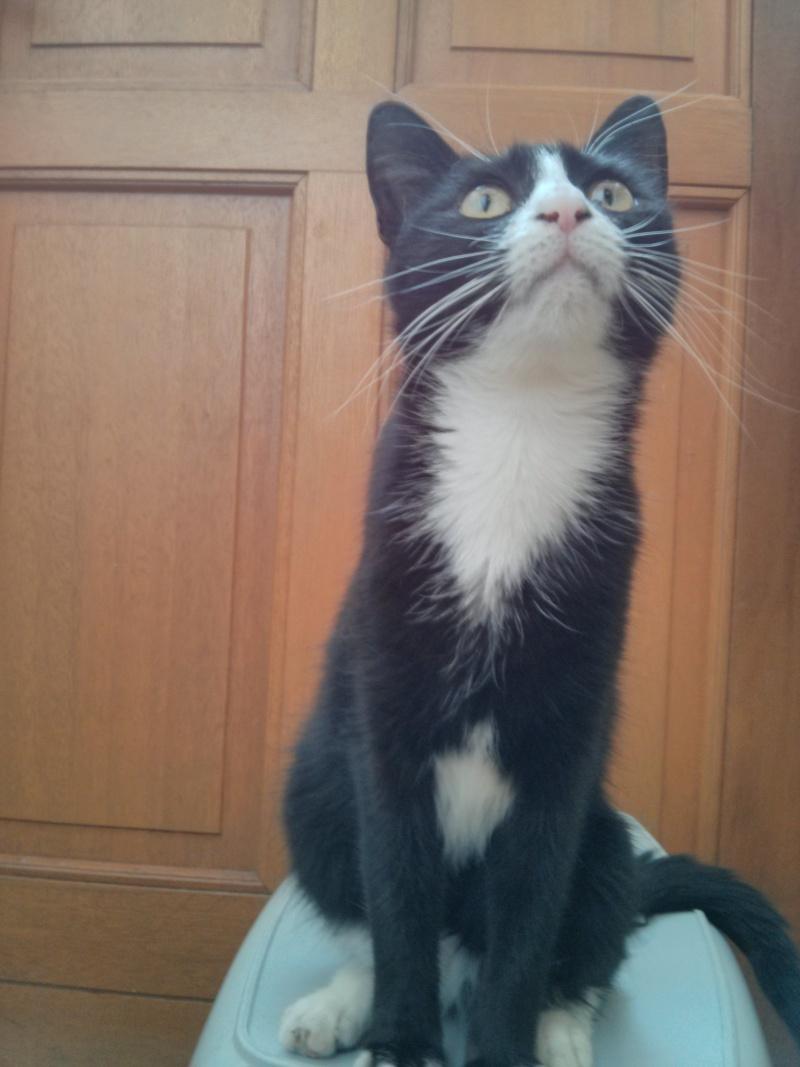 [SAUVETAGE] Harmonie - joli chaton biberon noir et blanc - BEUVRAGES Img_2010