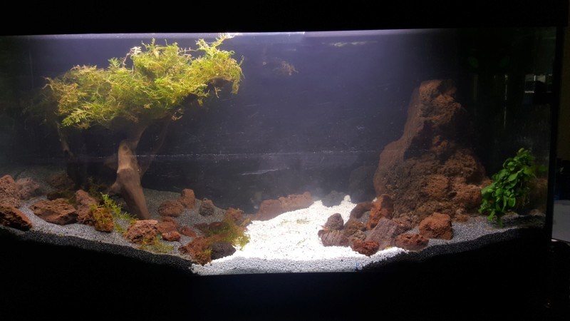 Aquascape asiatique - Page 2 20190215