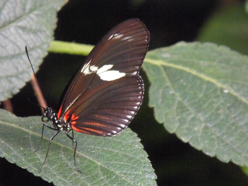 serre aux papillons4 A_iden13