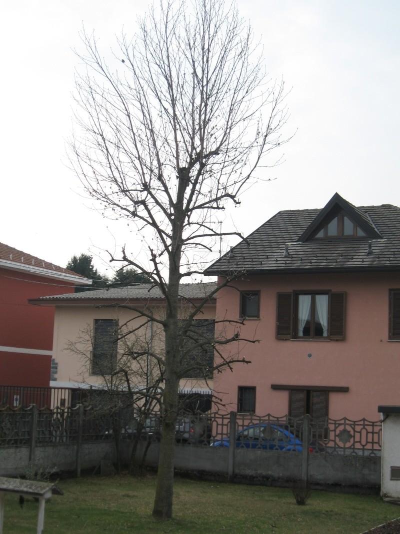 Piccolo tree climbing Img_9627