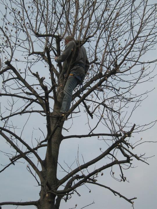 Piccolo tree climbing Img_9628