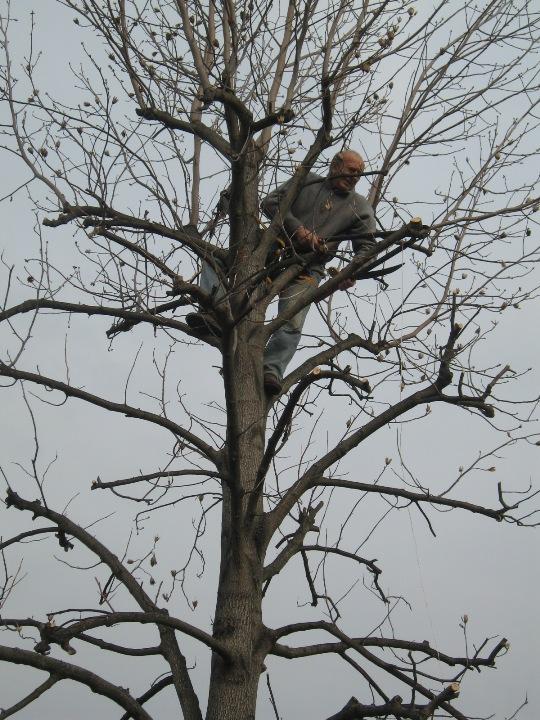 Piccolo tree climbing Img_9629