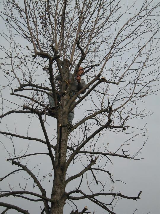 Piccolo tree climbing Img_9630