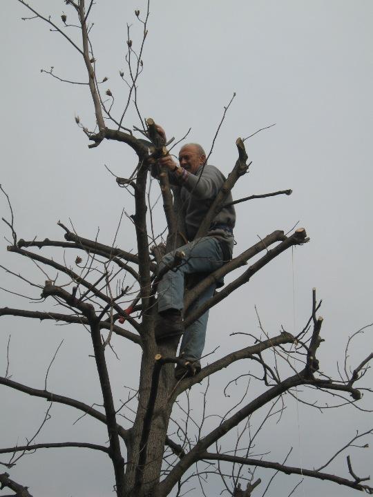 Piccolo tree climbing Img_9632