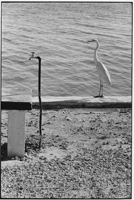 Elliott Erwitt [photographe] - Page 2 Z10