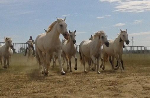 Facebook de l'élevage du Cyprès 12554711