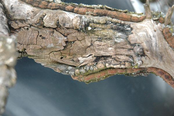 First steps to a spruce cascade Fichte15