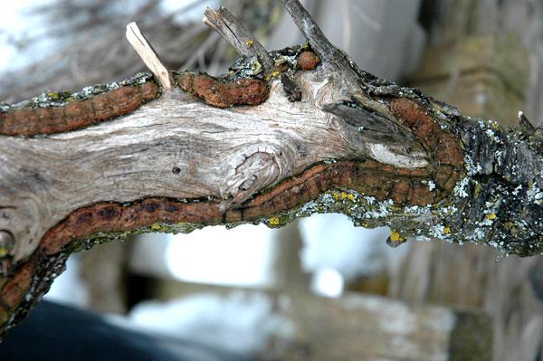 First steps to a spruce cascade Fichte16