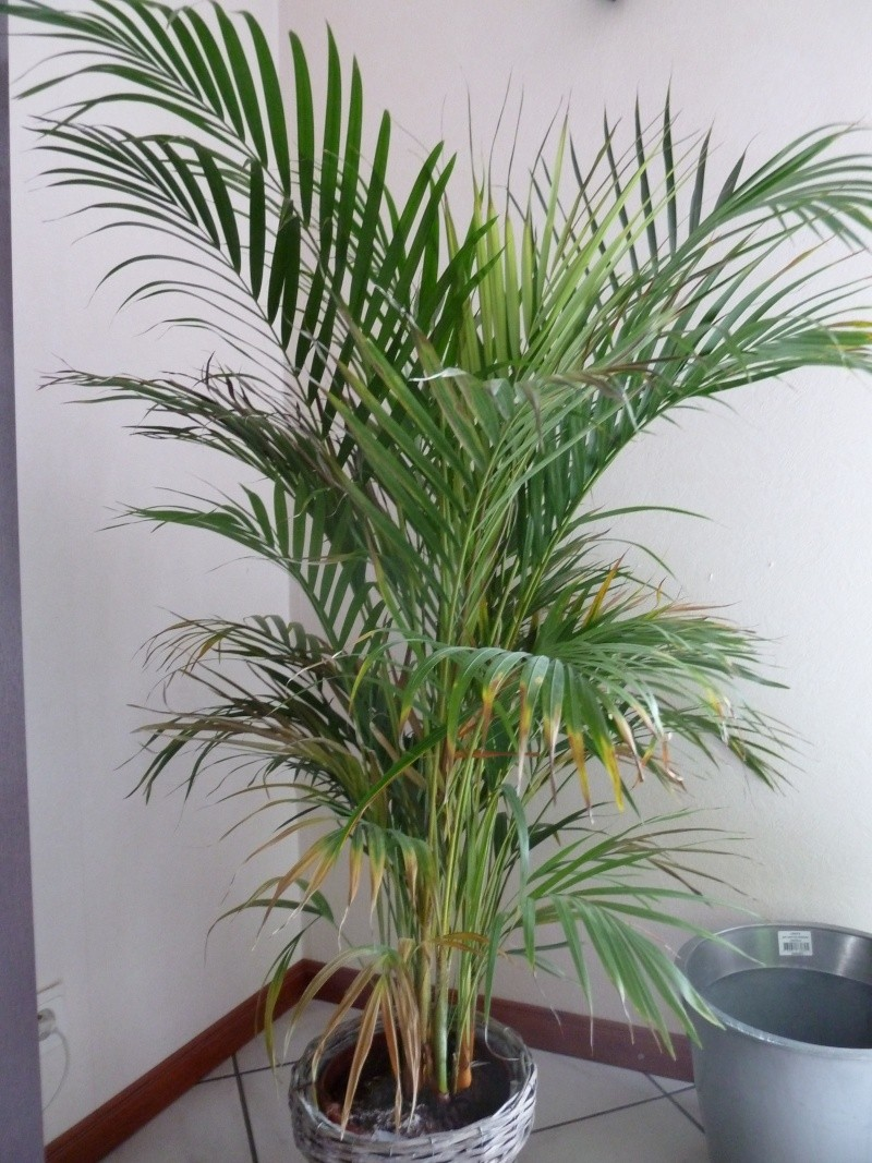 identification de plante P1020518