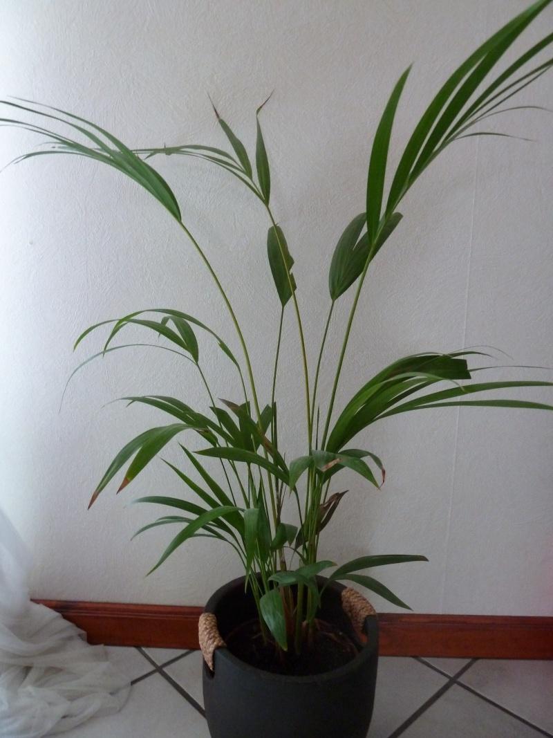 identification de plante P1020519
