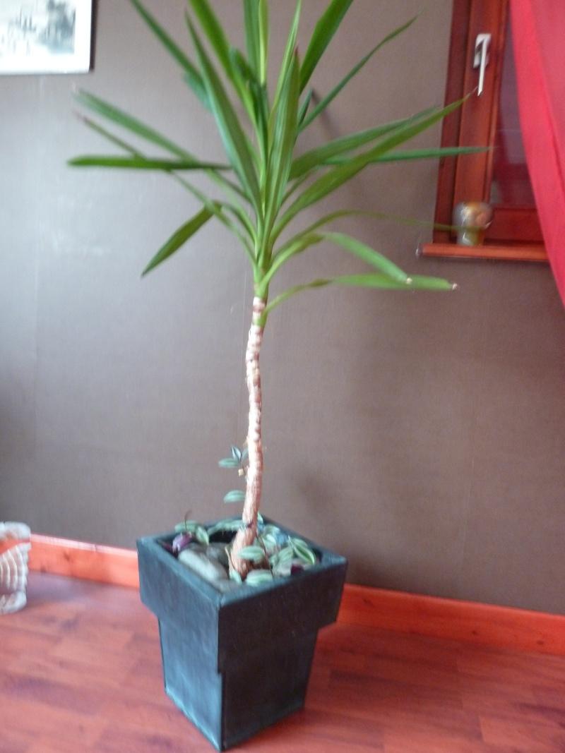 identification de plante P1020520