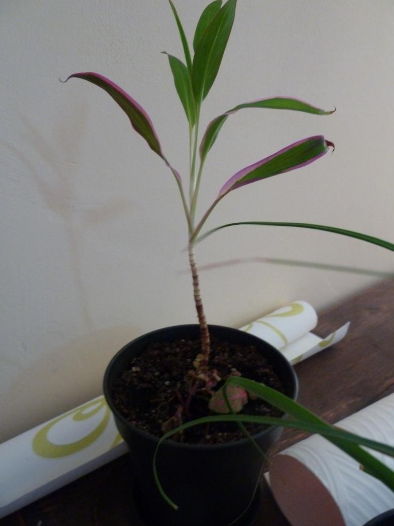identification de plante P1020522