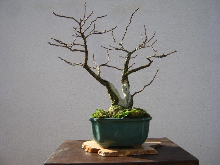 Acacia , brutta bestia . 369_bi11