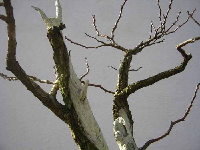 Acacia , brutta bestia . Immagi11