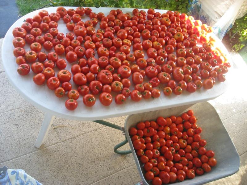 les tomates a la brouette Img_0017