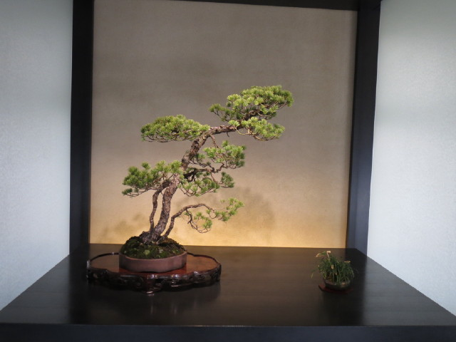 "Indoor displays, at the ""Omiya Bonsai Art Museum"" Saitama, Tokyo Img_1937"