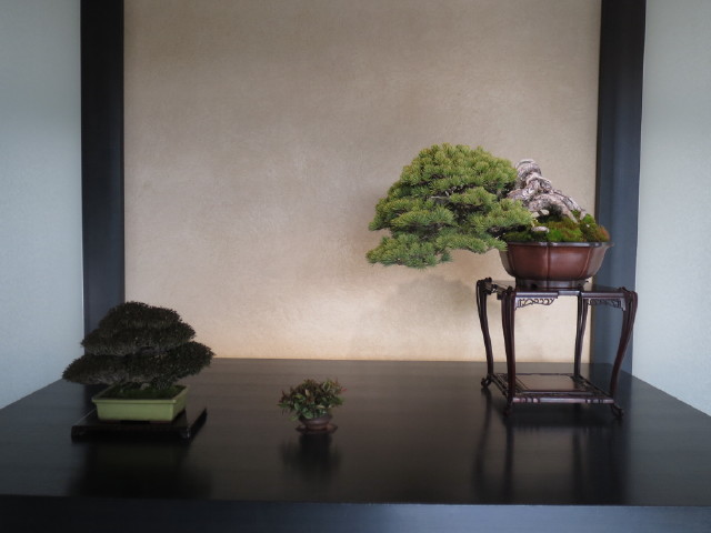 "Indoor displays, at the ""Omiya Bonsai Art Museum"" Saitama, Tokyo Img_1940"