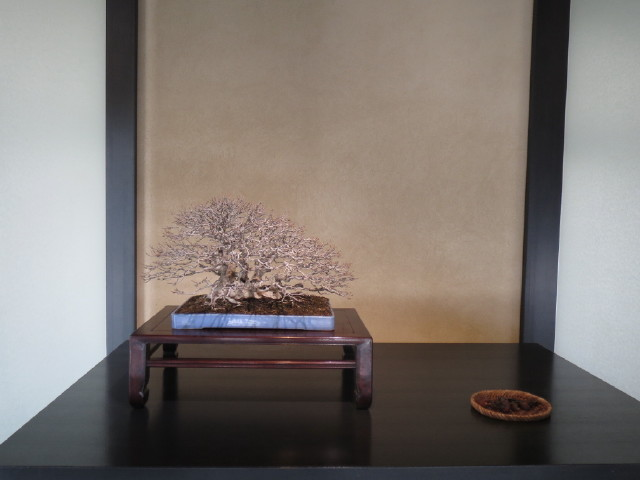 "Indoor displays, at the ""Omiya Bonsai Art Museum"" Saitama, Tokyo Img_1942"