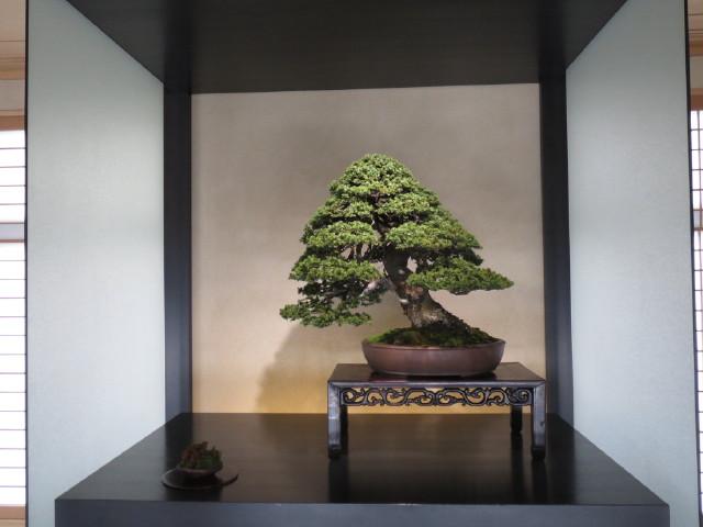 "Indoor displays, at the ""Omiya Bonsai Art Museum"" Saitama, Tokyo Img_1943"