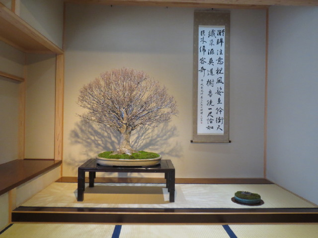"Indoor displays, at the ""Omiya Bonsai Art Museum"" Saitama, Tokyo Img_1944"