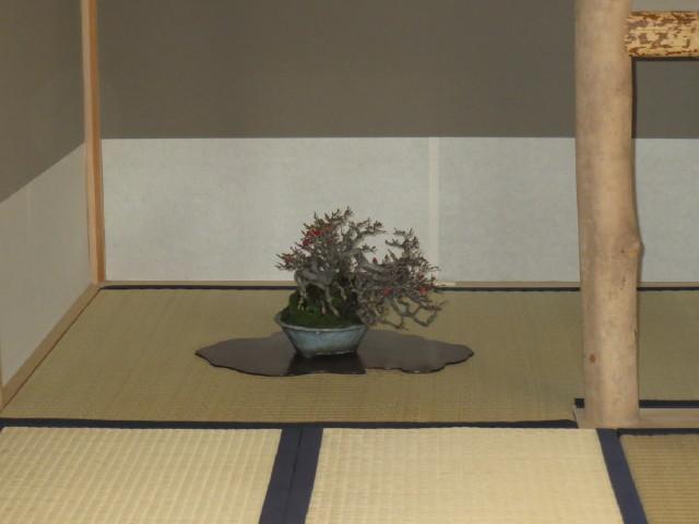 "Indoor displays, at the ""Omiya Bonsai Art Museum"" Saitama, Tokyo Img_1945"