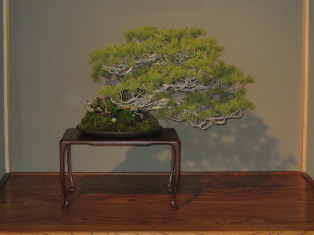 "Indoor displays, at the ""Omiya Bonsai Art Museum"" Saitama, Tokyo Img_1946"