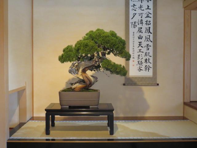 "Indoor displays, at the ""Omiya Bonsai Art Museum"" Saitama, Tokyo Img_1949"