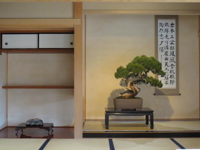 "Indoor displays, at the ""Omiya Bonsai Art Museum"" Saitama, Tokyo Img_1950"