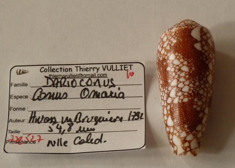 Conus (Darioconus) omaria      Hwass in Bruguière, 1792 - Page 2 Conus_18