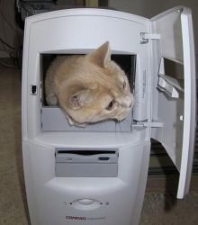 Il Segreto del Tenente Cat-in11
