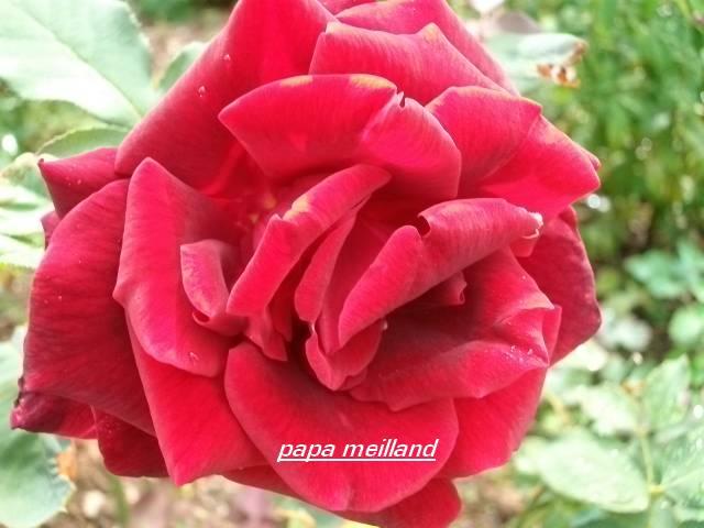 34 - La couleur rouge !!! - Page 2 Aout_049