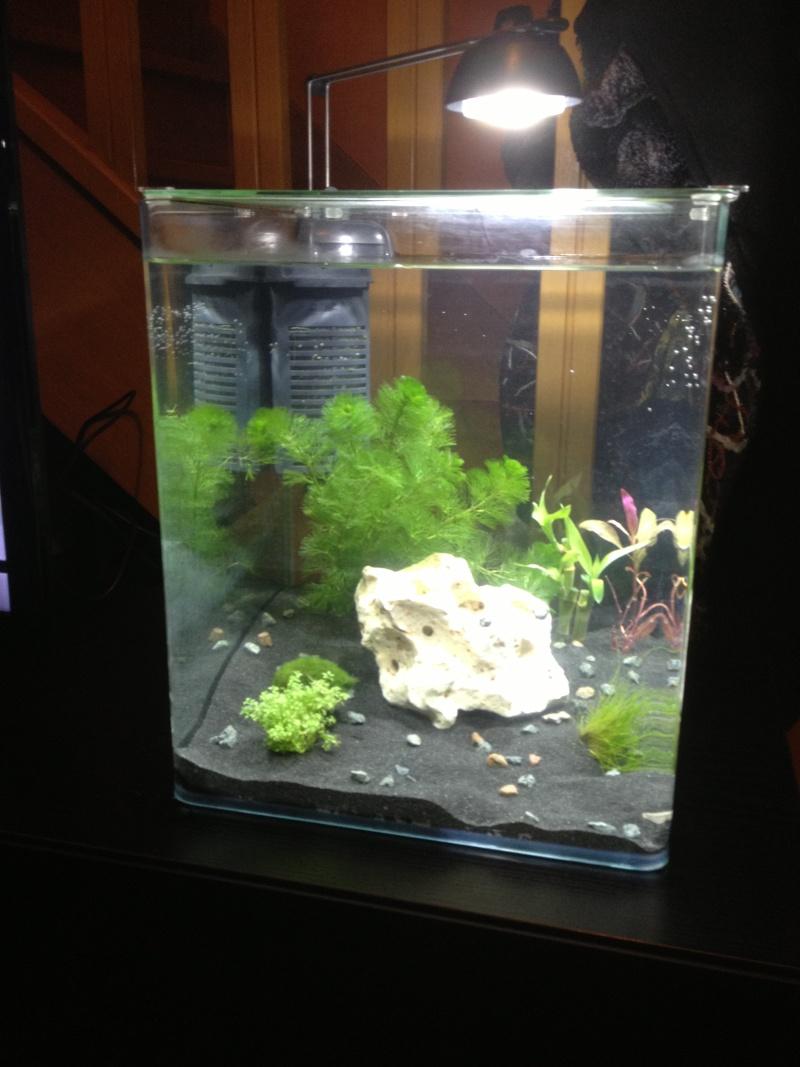 aquarium 30l pour crevette Img_0411