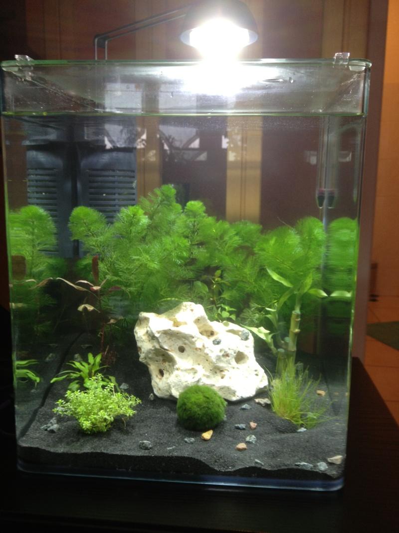 aquarium 30l pour crevette Img_0414
