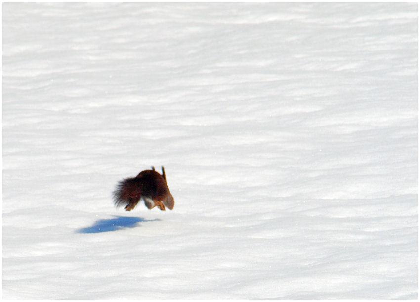 Flying squirrel Flying10