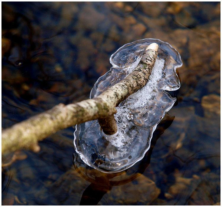 la nature s'amuse... Socle011