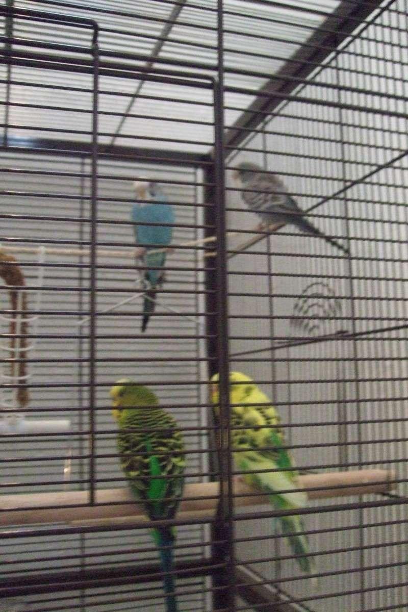 ma cage est-elle assez confortable pour mes 2 perrruches?? - Page 3 Dscf2921