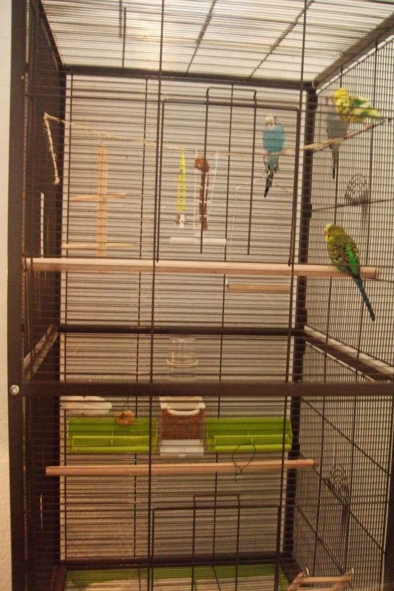 ma cage est-elle assez confortable pour mes 2 perrruches?? - Page 3 Dscf2923