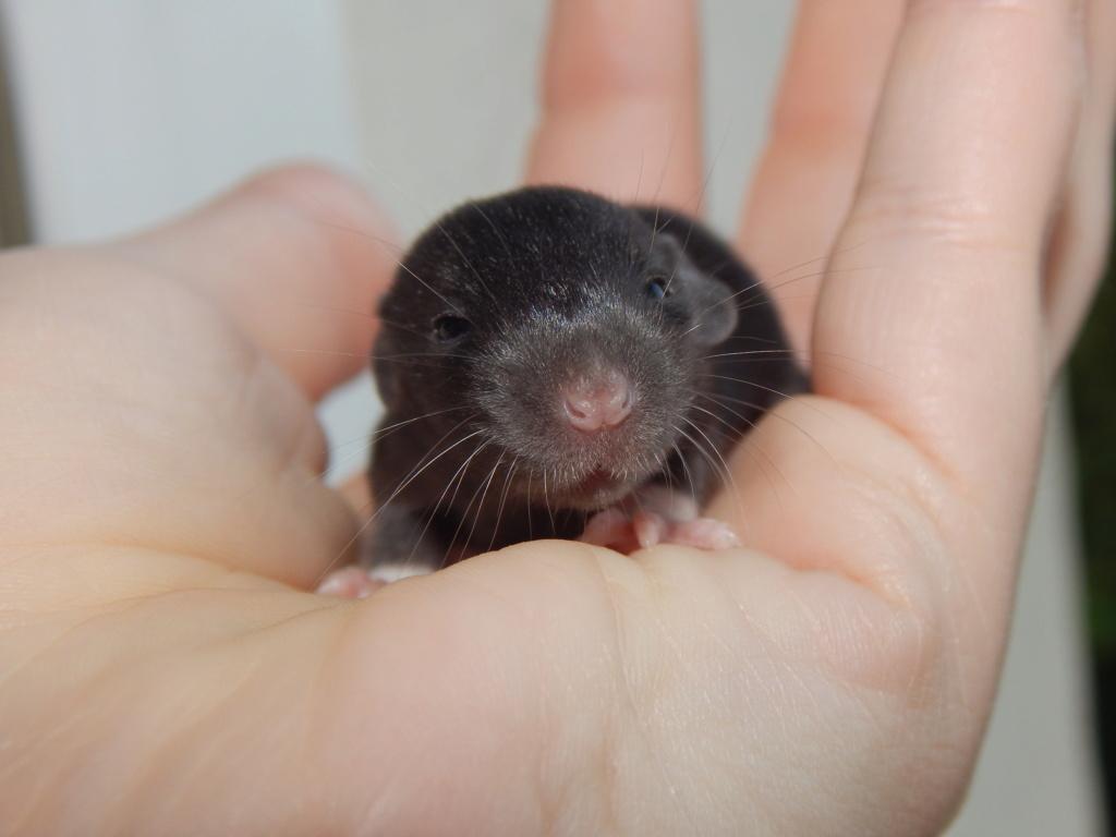 Ségolene et ses ratons Dscn8710