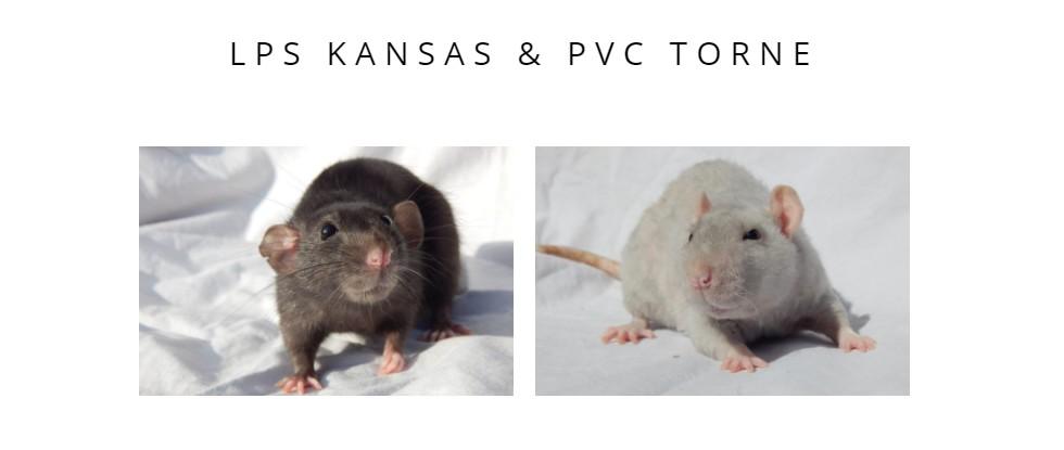 PVC Torne & LPS Kansas  Portzo10
