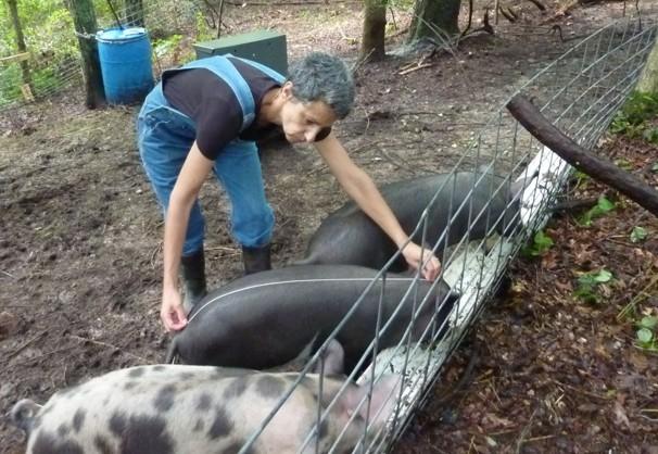 Bon Mardi Pig20m10