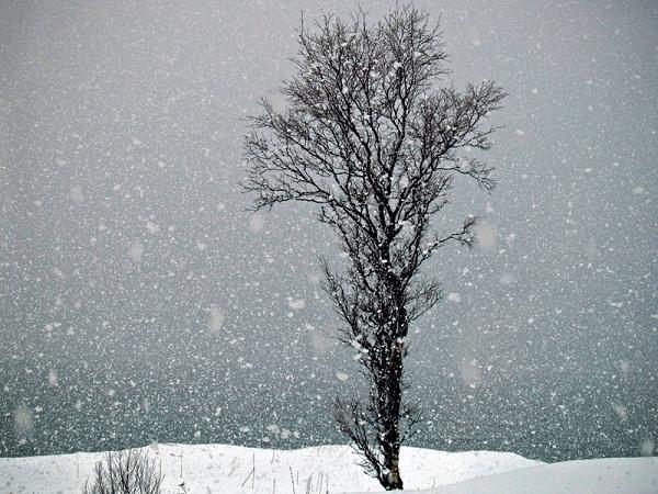 Bon Lundi Tree_s10